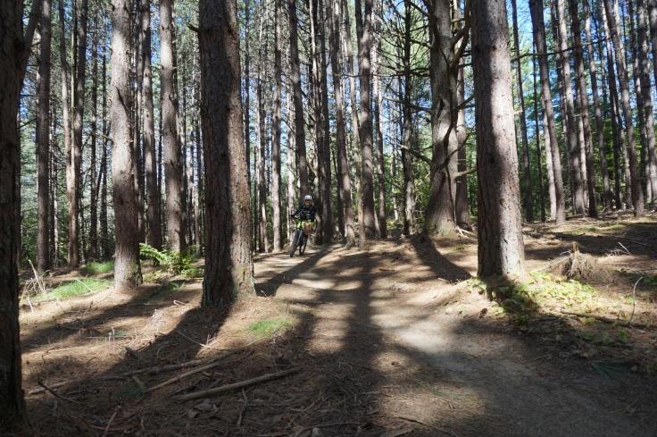 kt woods